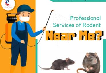 Are You Looking for Professional Services of Rodent and Pest Management Near Me?